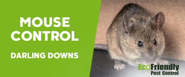 Mouse Control Darling Downs