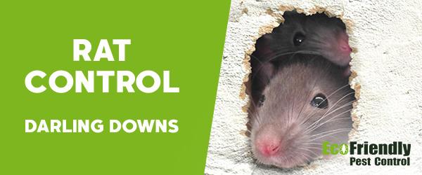 Rat Pest Control Darling Downs
