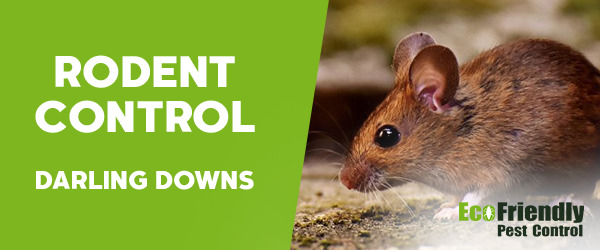 Rodent Treatment Darling Downs