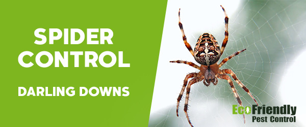 Spider Control Darling Downs