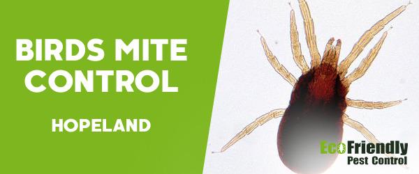 Bird Mite Control  Hopeland