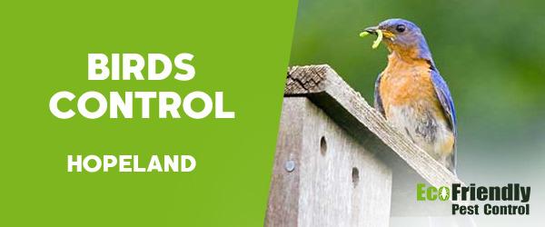 Birds Control  Hopeland