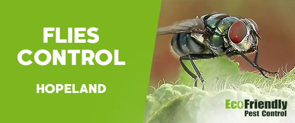Flies Control  Hopeland