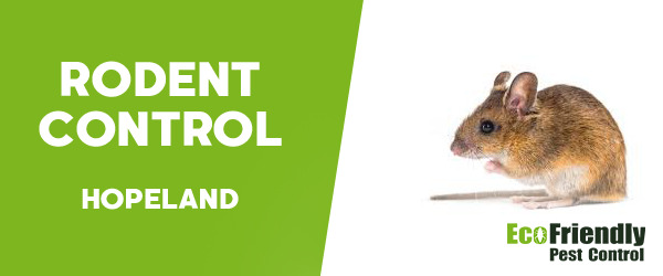 Rodent Treatment  Hopeland
