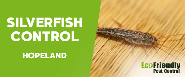 Silverfish Control  Hopeland