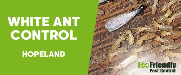 White Ant Control  Hopeland