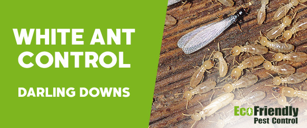 White Ant Control Darling Downs