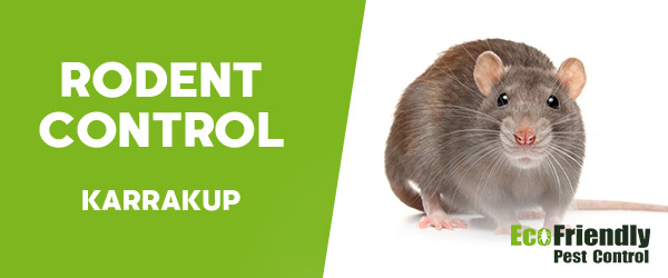Rodent Treatment  Karrakup