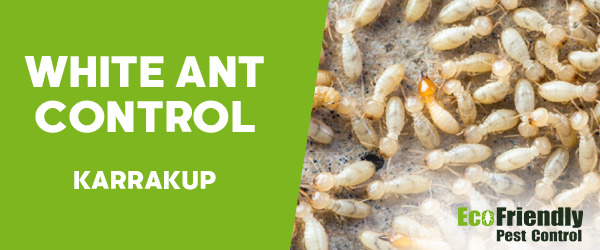 White Ant Control  Karrakup