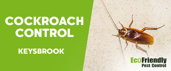 Cockroach Control Keysbrook