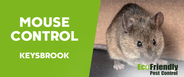 Mouse Control Keysbrook