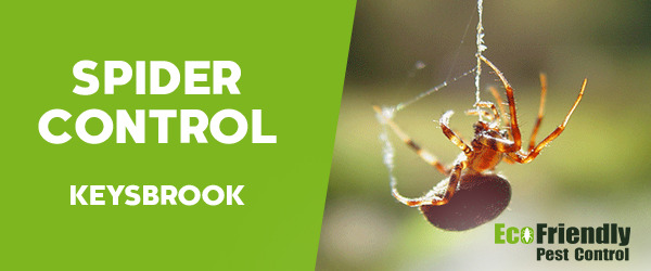 Spider Control Keysbrook