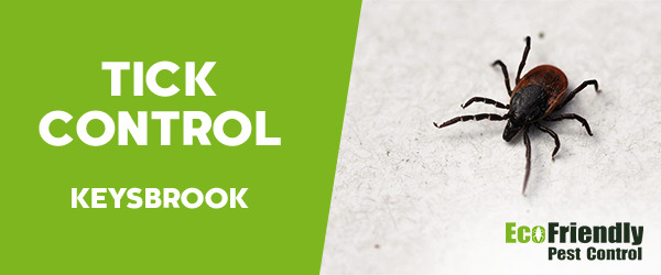 Ticks Control Keysbrook