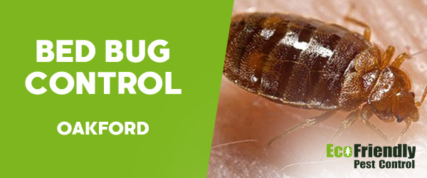 Bed Bug Control Oakford