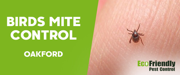 Bird Mite Control Oakford