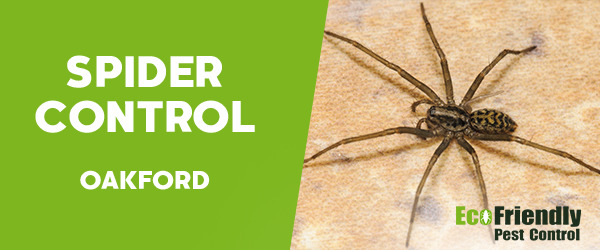 Spider Control Oakford