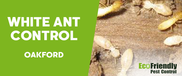 White Ant Control Oakford