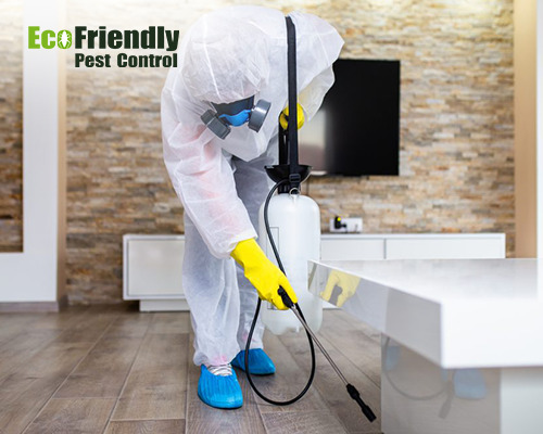 Pest Control Como