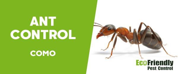 Ant Control Como