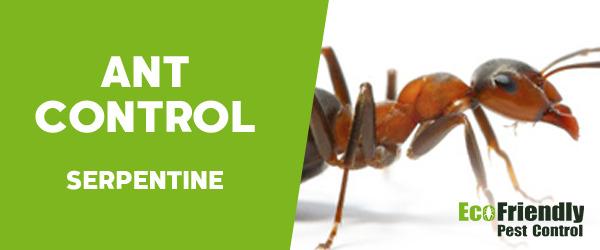 Ant Control Serpentine