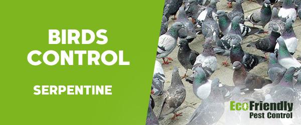 Birds Control Serpentine