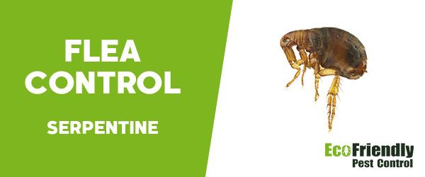 Fleas Control Serpentine