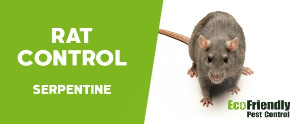 Rat Pest Control Serpentine