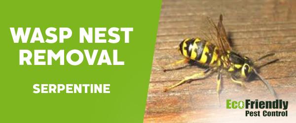 Wasp Nest Remvoal Serpentine