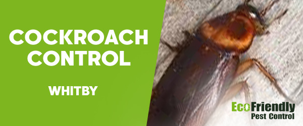 Cockroach Control Whitby