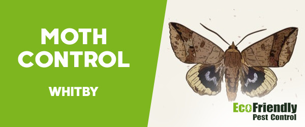 Moth Control Whitby