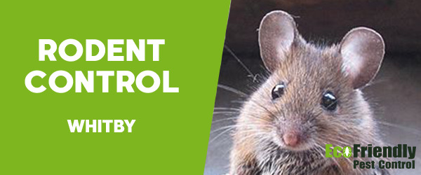 Rodent Treatment Whitby