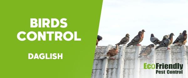 Birds Control Daglish