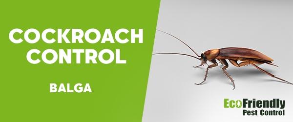 Cockroach Control  Balga