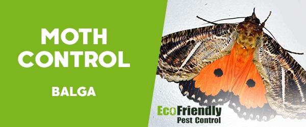 Moth Control  Balga