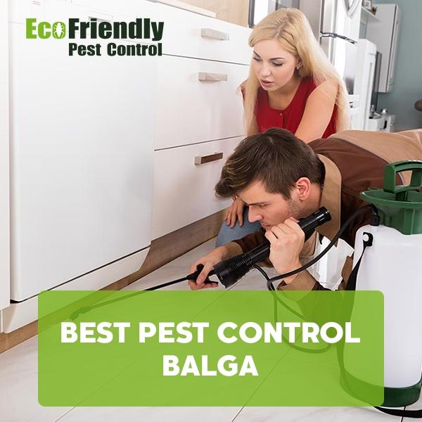 Best Pest Control  Balga