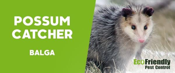Possum Catcher  Balga