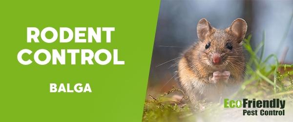 Rodent Treatment  Balga