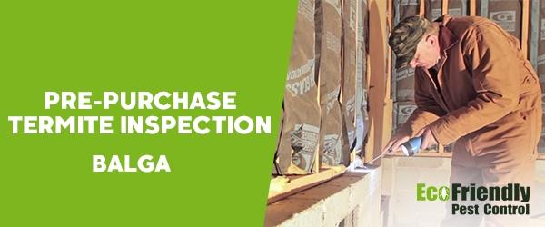 Pre-purchase Termite Inspection  Balga