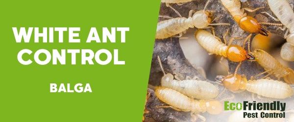 White Ant Control  Balga