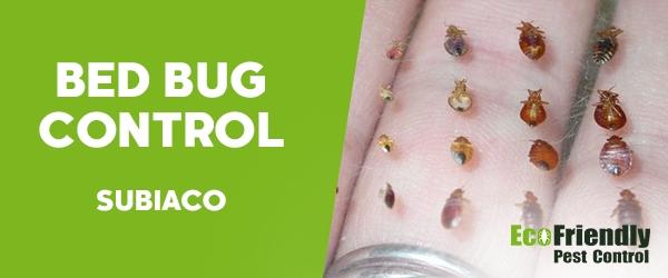 Bed Bug Control Subiaco