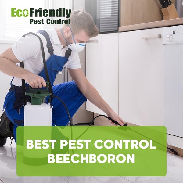Best Pest Control Beechboro