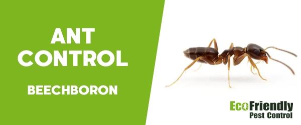 Ant Control Beechboro