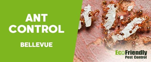 Ant Control Bellevue