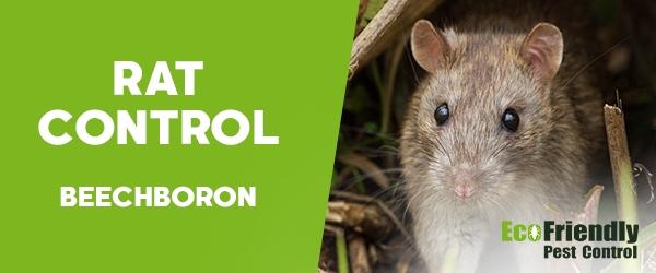 Rat Pest Control Beechboro