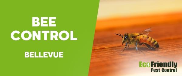 Bee Control Bellevue
