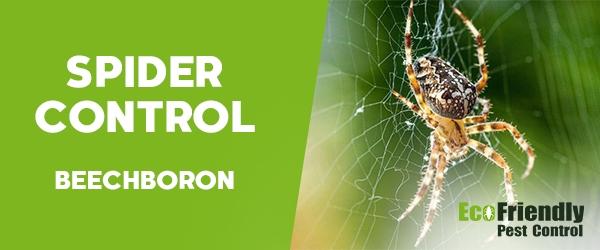 Spider Control Beechboro