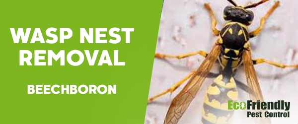 Wasp Nest Remvoal Beechboro