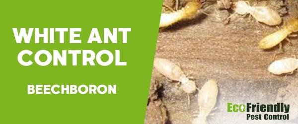 White Ant Control Beechboro