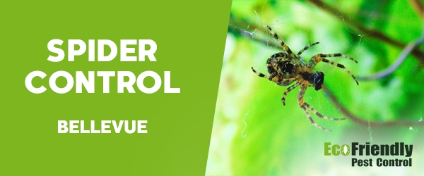 Spider Control Bellevue