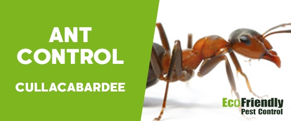Ant Control Cullacabardee